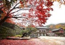 Cheoneunsa_Temple_Article_04.jpg