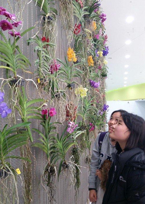 151223_orchid_art3.jpg