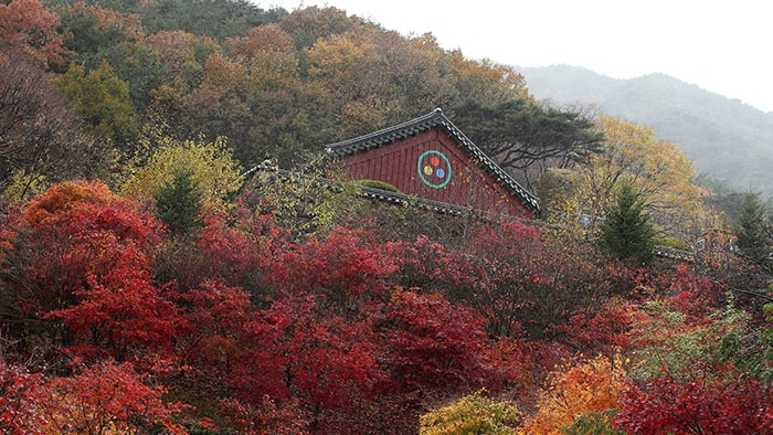Autumn foliage will reach its peak at Jirisan on Oct. 24. Pictured is an autumn view of Hwaeoms Temple at Jirisan Mountain.