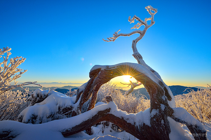 The sunrise gives a beautiful glow to Taebaeksan Mountain's frosted trees and bushes.