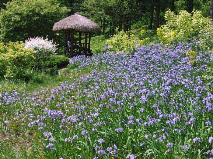 Flowers create a beautiful scene, surrounding a gazebo in the garden.