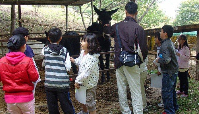 Farm_House_Donkey_01.jpg