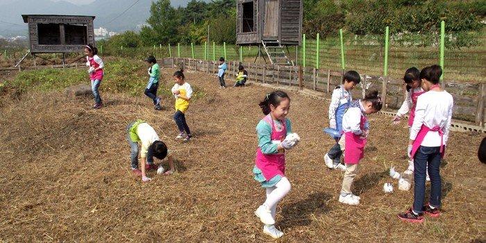 Farm_House_Rabbit_01.jpg