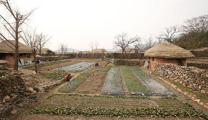 읍성 초가 사이사이에 자리 잡은 텃밭에서는 주민들이 다양한 작물을 키우는 모습을 볼 수 있다.