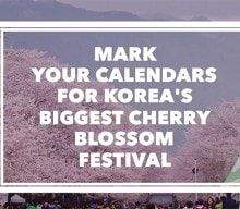 Korea's biggest cherry blossom festival