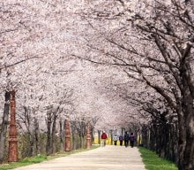 Seoul announced official spring flower trails