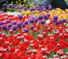 International Horticulture Goyang Korea