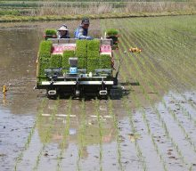 Year's first rice planting in Hamyang