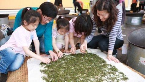 Boseong Green Tea Festival