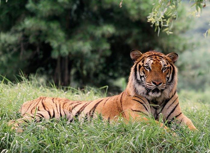 tiger_171024_aricle_01.jpg